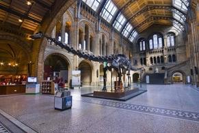 Dippy el Diplodocus será retirado del Museo de Historia Natural de Londres