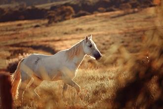 Se convocan hombres que monten a caballo para grabación en Madrid